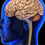 نیم کره های مغز و عملکرد آنها