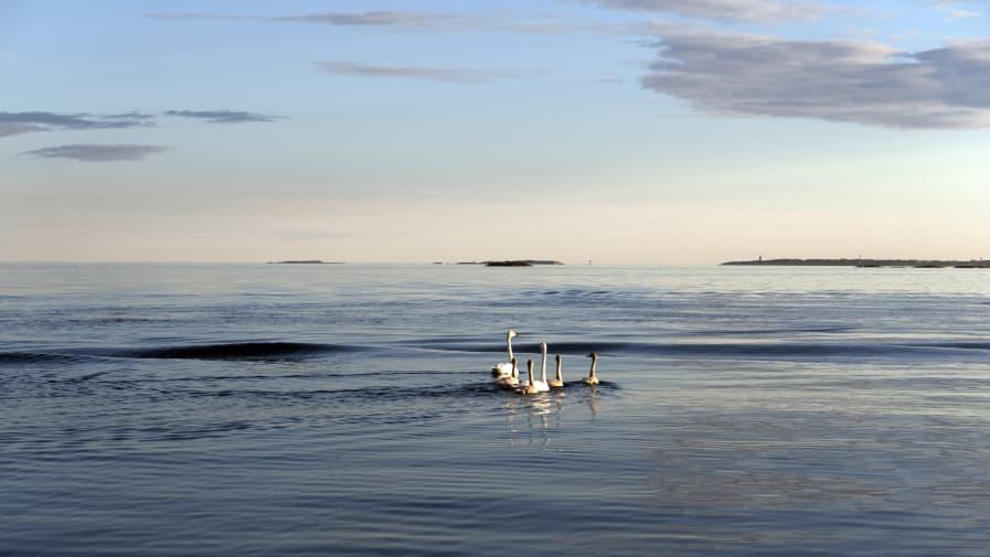 جزیره بانوان