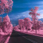 تصاویر زیبایی از عکاس فرانسوی pierre louis ferrer