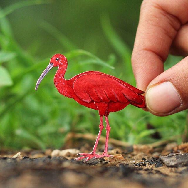 پرنده های مینیاتوری