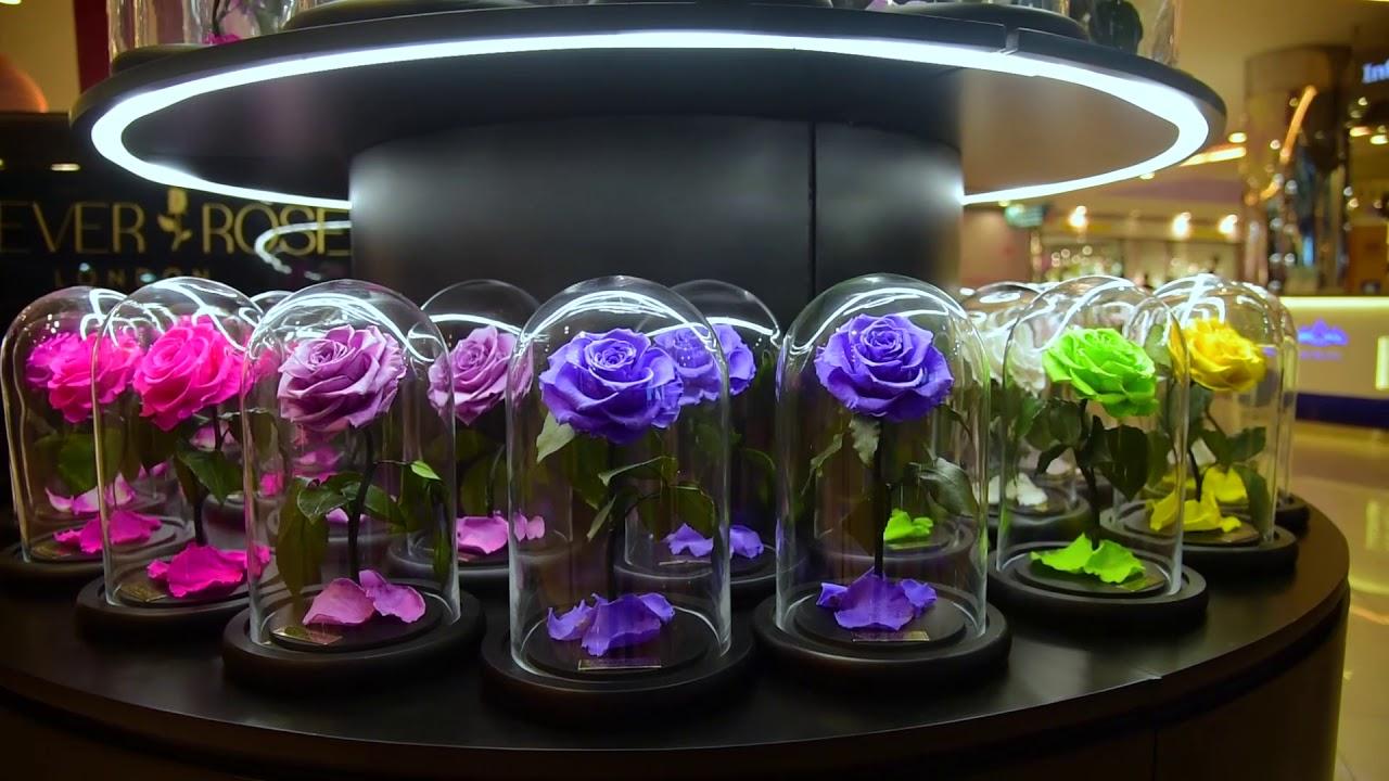 گلهای رز طبیعی