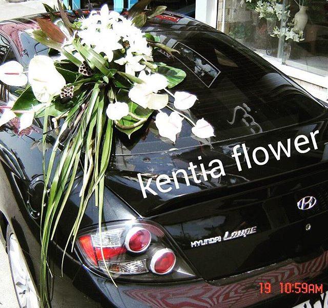 kentiaflowers (8)